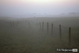 Foggy fenced meadow