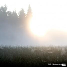 Spiderwebs at sunrise
