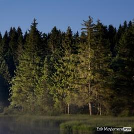 Sunrise capturing the pines