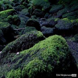 Sleeping green monsters